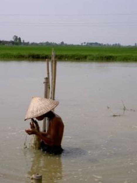 ragazzo-vietnam-di-lavoro-in-acqua_2415609