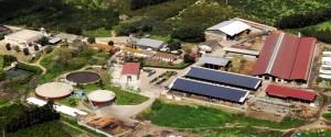fattoria della piana 3